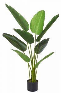 Cordyline Plant 120cm