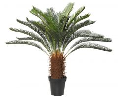 Giant Cycad Tree Green 110cm