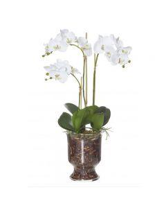 3 Phalaenopsis Odette Bowl 78cm White Hampton Style Decoration