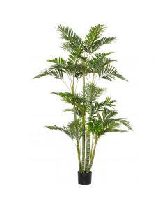 Cane Palm 180cm Hampton Style Green