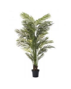Areca Palm 213cm Hampton Style Green
