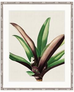 """Designer Boys Collections"" Lush Tropic I Artwork, Amali Tropic Collection"